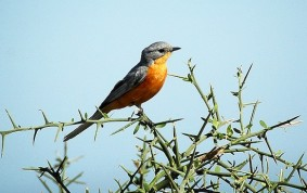Bird in Serengeti