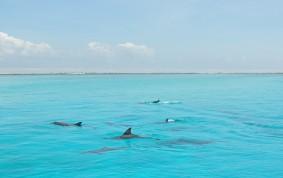 Dolphins at Mnemba island, Zanzibar