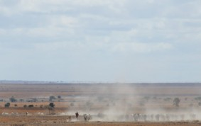 Masai steppe during dry season